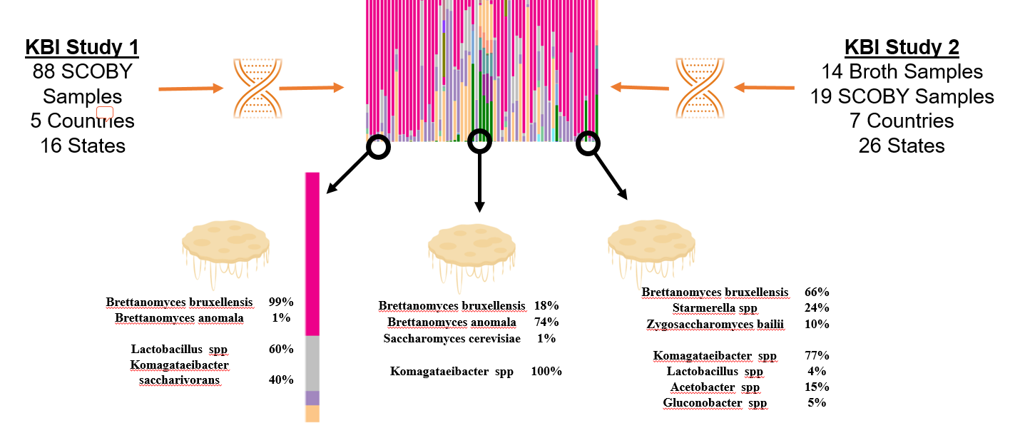 results of DNA sequencing of SCOBYs